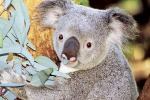 Perth Zoo General Entry Ticket and Sightseeing Cruise - Hervey Bay Accommodation