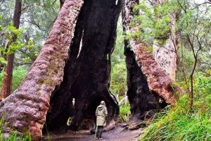 Margaret River Wineries Caves Ocean and Karri - Air  Ground Tour - Hervey Bay Accommodation