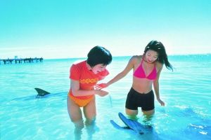 Monkey Mia Dolphins  Shark Bay Air Tour From Perth - Hervey Bay Accommodation